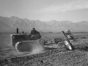 Benji Iguchi driving a tractor, Manzanar Relocation Center, California, 1943 by Ansel Adams