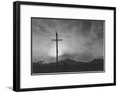 Birds on Wire, Evening