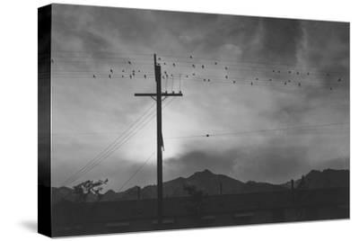 Birds on Wire, Evening