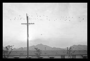 Birds on Wire by Ansel Adams