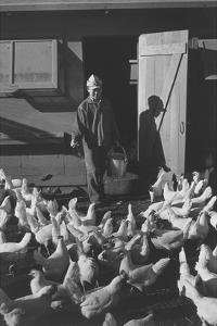 Chicken Farm, Mori Nakashima by Ansel Adams