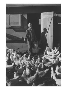 Chicken Farm, Mori Nakashima by Ansel Adams