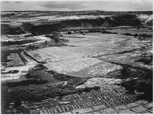 Corn Field Indian Farm Near Tuba City Arizona In Rain 1941. 1941 by Ansel Adams