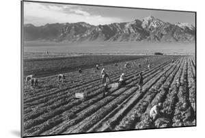 Farm, Farm Workers, Mt. Williamson in Background by Ansel Adams