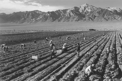 Farm, Farm Workers, Mt. Williamson in Background