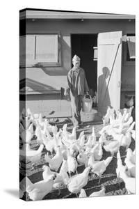 Mori Nakashima feeding chickens, Manzanar Relocation Center, 1943 by Ansel Adams
