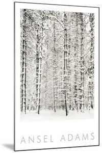 Pine Forest in the Snow, Yosemite National Park by Ansel Adams
