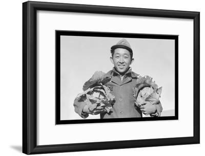 Richard Kobayashi, Framer with Cabbages