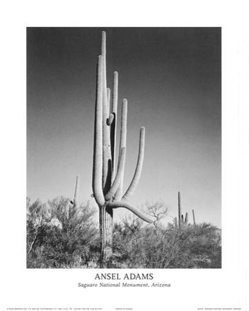 Saguaro National Monument Arizona