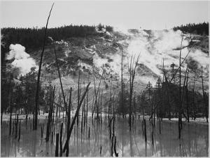 Trunks Rising From Water, Stream Rising From Mts, Roaring Mt Yellowstone NP Wyoming 1933-1942 by Ansel Adams