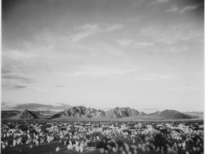 View Of Mts Desert Shrubs Highlighted Fgnd, Death Valley National Monument, California 1933-1942 by Ansel Adams