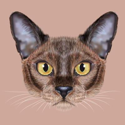 Illustrated Portrait of Burmese Cat. by ant_art19