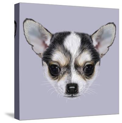 Illustrative Portrait of Chihuahua Puppy. Cute Bi-Colour Little Dog (Black & White).