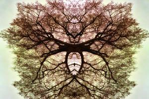 Tree, 2020, (photograph) by Ant Smith