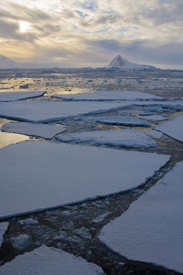 Antarctica. Near Adelaide Island. the Gullet. Ice Floes and Brash Ice-Inger Hogstrom-Photographic Print