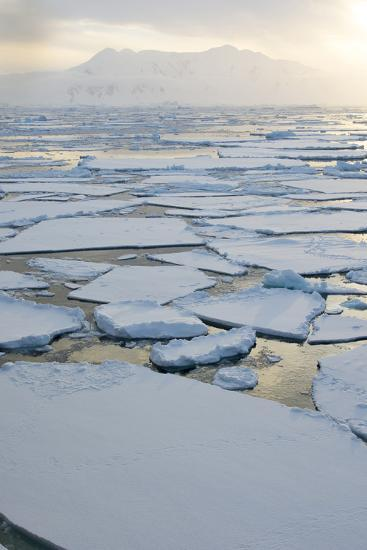 Antarctica, Near Adelaide Island. the Gullet. Ice Floes and Brash Ice-Inger Hogstrom-Photographic Print