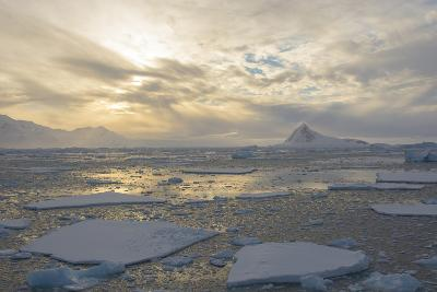 Antarctica, Near Adelaide Island. the Gullet. Ice Floes at Sunset-Inger Hogstrom-Photographic Print