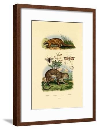 Anteater, 1833-39