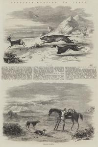 Antelope Hunting in India