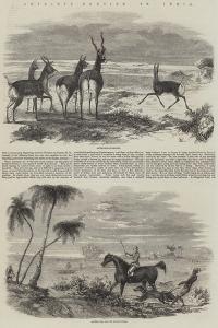 Antelope-Hunting in India