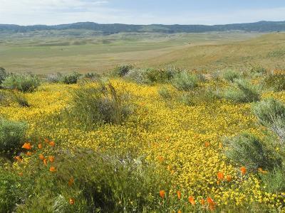 Antelope Valley Poppy Reserve, California, USA-Ethel Davies-Photographic Print
