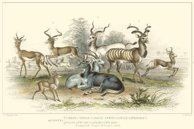 Antelope Varieties-J. Stewart-Art Print