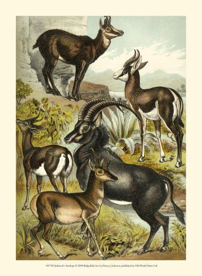 Antelope-Henry J^ Johnson-Art Print