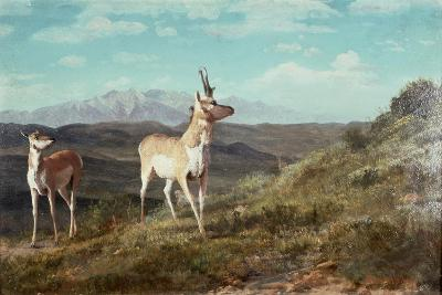 Antelope-Albert Bierstadt-Giclee Print