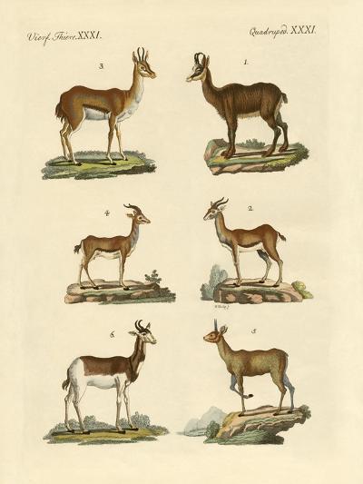 Antelopes and Gazelles--Giclee Print