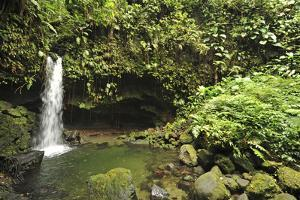 Dominica, Morne Trois Pitons, Tourists Visiting Emerald Pool by Anthony Asael