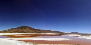 Flamingoes, Bolivian desert, Bolivia by Anthony Asael