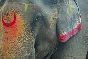 India, Bihar, Patna, Sonepur Mela Cattle Fait, Painted Elephant by Anthony Asael