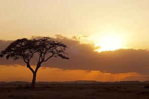 Kenya, Amboseli National Park, Lonely Tree at Sunset by Anthony Asael