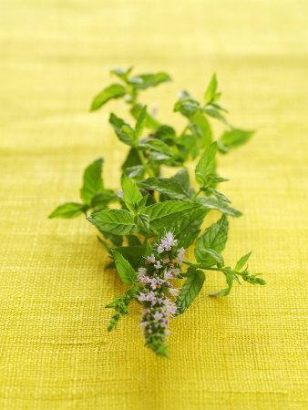 Flowering Mint Sprig