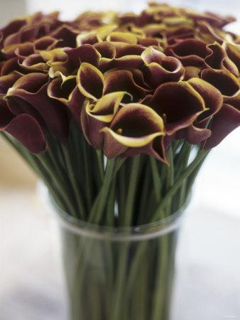 Red Calla Lilies in a Vase