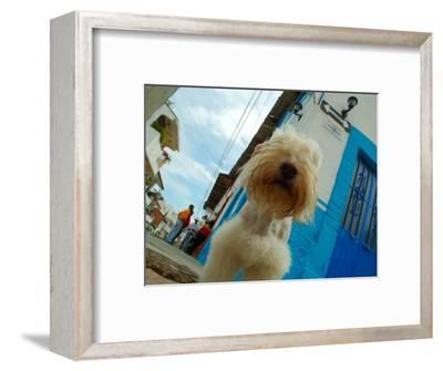 Dog in Zona Centro, Puerto Vallarta, Mexico