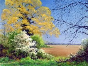 Blackthorn Winter, 2003 by Anthony Rule