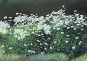 Shasta Daisies, 1992 by Anthony Rule