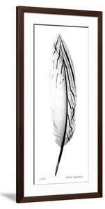 Feather II by Anthony Tahlier