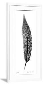 Feather III by Anthony Tahlier