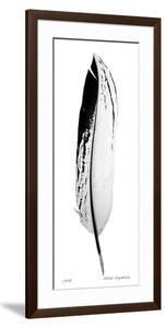 Feather IV by Anthony Tahlier