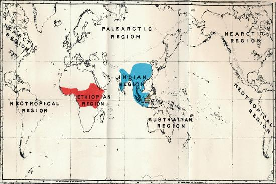 'Anthropoidea - Map distribution Genera Semnopithecus (Blue), Nasalis (Brown), Colobus (Red)', 1897-Unknown-Giclee Print