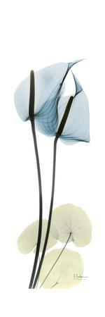 https://imgc.artprintimages.com/img/print/anthurium-blues_u-l-pyjstw0.jpg?p=0