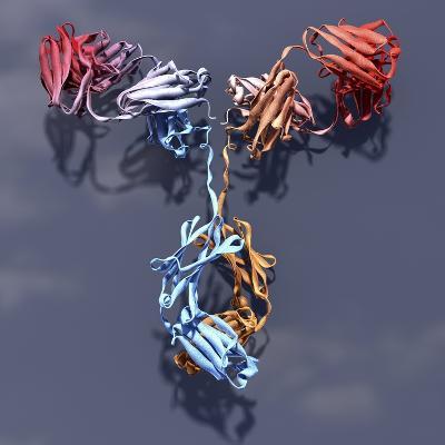 Antibody, Molecular Model-Phantatomix-Photographic Print