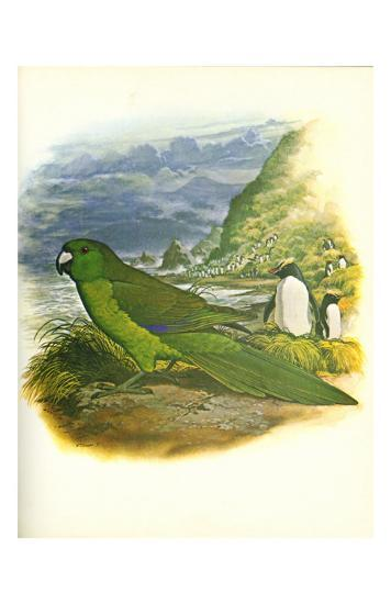 Antipodes Green Parakeet no. 241--Art Print