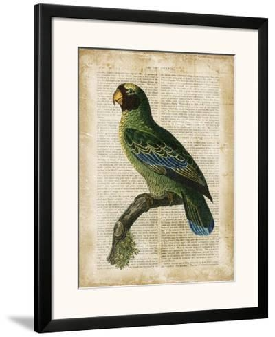 Antiquarian Birds VI--Framed Art Print