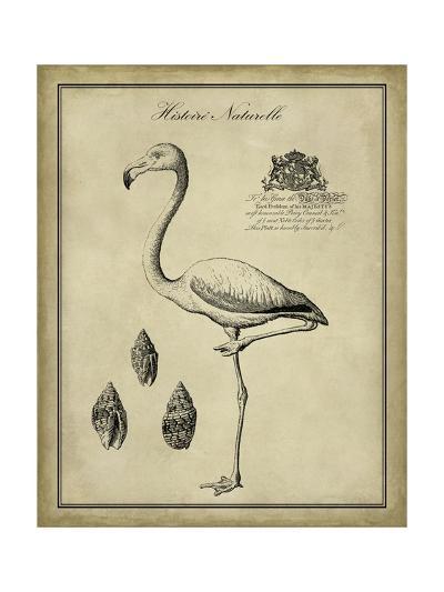 Antiquarian Flamingo-Vision Studio-Art Print