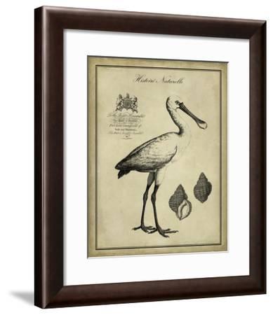Antiquarian Spoonbill-Vision Studio-Framed Art Print
