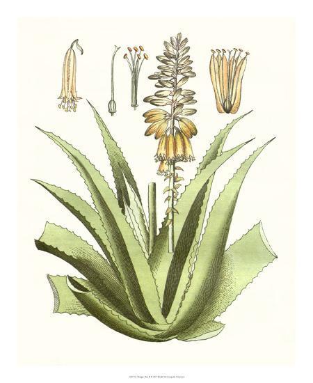 Antique Aloe II-Unknown-Giclee Print