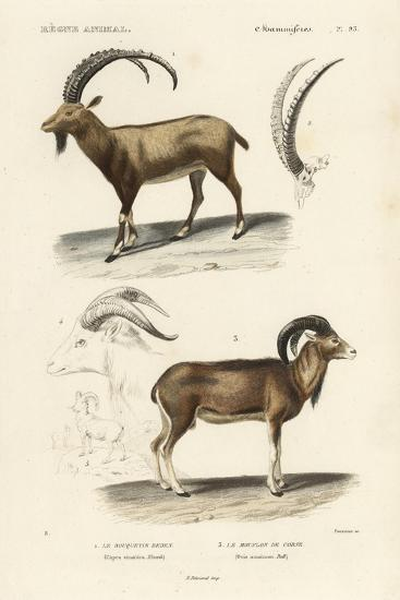 Antique Antelope and Ram Study-N^ Remond-Art Print